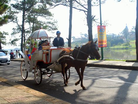 Kết quả hình ảnh cho xe ngựa