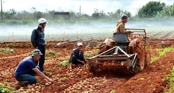 Sáng chế độc quyền máy đào khoai tây của nông dân lớp 81