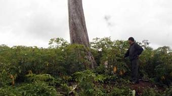 Sự 'chảy máu' đất và rừng nông lâm trường: Đâu là 'liều thuốc' hữu hiệu?