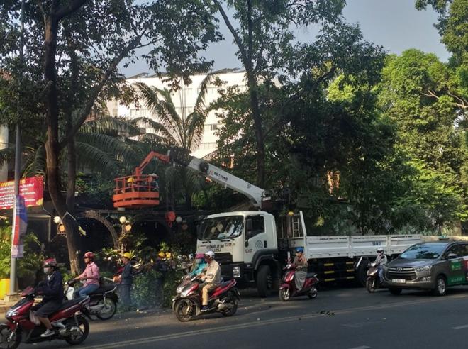 Đơn vị quản lý cây xanh đường phố tỉa cành, cắt nhánh cây trên đường Phạm Ngọc Thạch (quận 3)