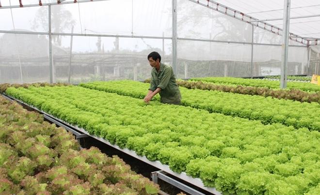 Độc đáo vườn rau thủy canh ở xứ Huế có thể ăn sống tại vườn