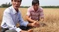 Nắng nóng cực độ, ruộng đồng ở Huế nứt nẻ, cây trồng thiệt hại nặng
