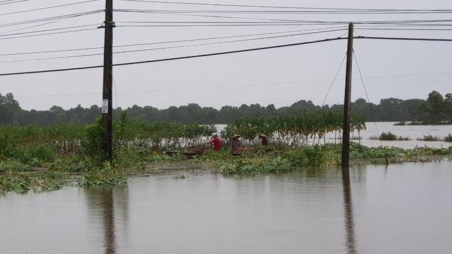Ngâm mình trong nước, giúp dân thoát khỏi vùng ngập lụt - Ảnh minh hoạ 7