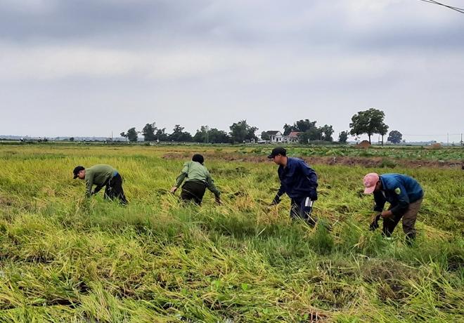 CBCS Công an góp ngày lương trao quà và giúp dân gặt lúa - Ảnh minh hoạ 2