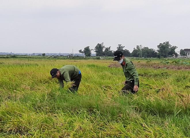 CBCS Công an góp ngày lương trao quà và giúp dân gặt lúa - Ảnh minh hoạ 3