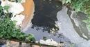 Nước xả thải của Công ty Bảo Lâm gây ô nhiễm môi trường