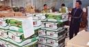 Tìm giải pháp chống buôn lậu, hàng giả đối với phân bón và thuốc bảo vệ thực vật