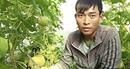 Cần liên kết giữa nông dân với doanh nghiệp trong nông nghiệp ứng dụng công nghệ cao