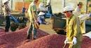 Nâng cao giá trị xuất khẩu cà phê Việt Nam
