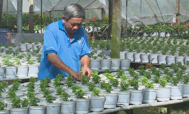 Chủ nhà vườn hào hứng với nhiều giống hoa mới, lạ chào xuân