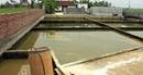 Ngoại thành Hải Phòng mòn mỏi chờ nước sạch