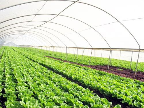 GFS tiên phong trong phát triển nông nghiệp hữu cơ công nghệ cao