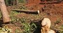 Vô tư phá rừng trước... trạm bảo vệ rừng