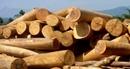 Quy định tạm ngừng kinh doanh tạm nhập, tái xuất gỗ từ Lào và Campuchia