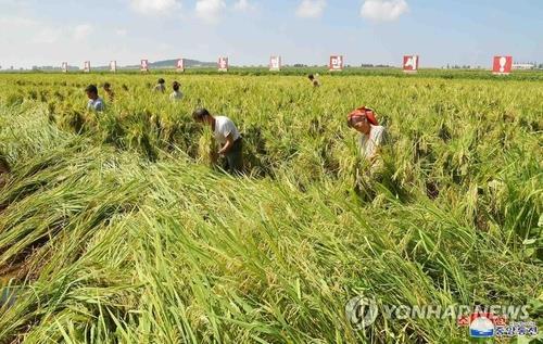Nghiên cứu tiết lộ thực trạng thiếu lương thực tại Triều Tiên