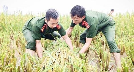 Cán bộ Công an lội bùn giúp dân gặt lúa, dựng lại nhà sau bão