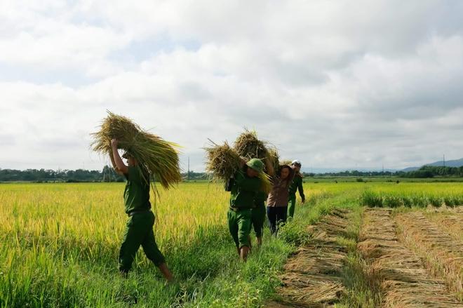 Công an giúp dân gặt lúa