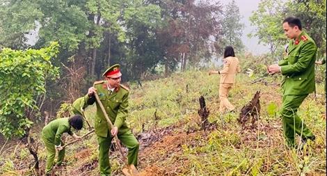 Trồng 1.000 cây hồi tặng người dân