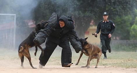 Chiến công mới của đội quân chó nghiệp vụ