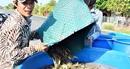 Xử lý mạnh tay với nạn tùy tiện khoan giếng lấy nước nuôi tôm
