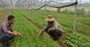 Hiệu quả mô hình trồng rau sạch công nghệ cao ở vùng ven đô thị Đà Nẵng