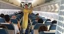 Phát hiện, xử lý nhiều vụ trộm hành lý của khách đi máy bay1