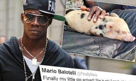 Balotelli nuôi lợn cầu may.