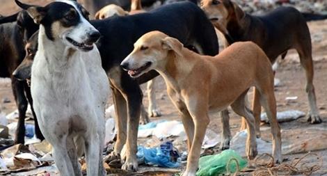 Xử lý thế nào với việc chó nuôi cắn chết người?1