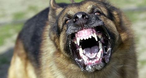 Chó cắn chết người, chủ có vô can?