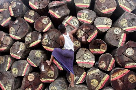 Gỗ và các sản phẩm từ gỗ của Myanmar sẽ đưa nước này vào cuộc chạy đua hưởng lợi từ thương chiến Mỹ – Trung.