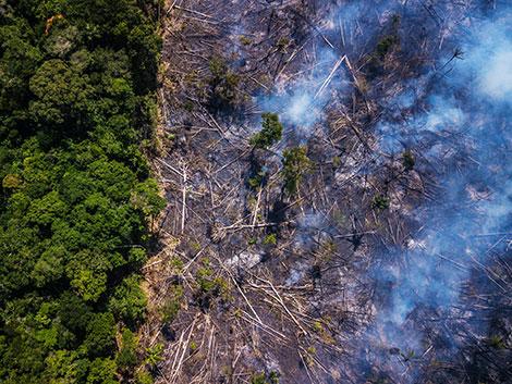 "Thế giới chung tay giải cứu ""lá phổi xanh"" Amazon"