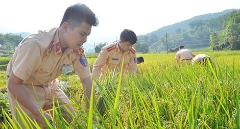 Sắc nắng giữa mùa vàng Điện Biên4