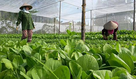 Nhiều ưu đãi khuyến khích phát triển nông nghiệp hữu cơ