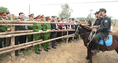 Chăm sóc, huấn luyện tốt các cá thể ngựa phục vụ lực lượng Kỵ binh