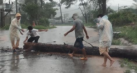 CSGT dầm mưa cùng người dân dọn cây gỗ lớn đổ ngang đường