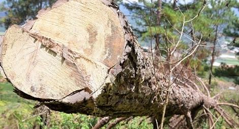 Từ phản ánh của báo CAND, củng cố hồ sơ khởi tố vụ án phá rừng ở Langbiang