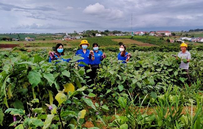 75 tấn lương thực, thực phẩm hỗ trợ các khu cách ly ở TP Hồ Chí Minh - Ảnh minh hoạ 2