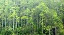 Mức hỗ trợ trồng rừng sản xuất, trồng cây phân tán và khuyến lâm