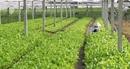 DN đầu tư vào nông nghiệp được miễn tiền chuyển mục đích sử dụng đất