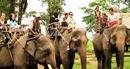 Tài trợ 65.000USD cho chuyển đổi mô hình du lịch cưỡi voi tại Đắk Lắk