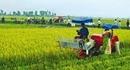 Cả nước có tới 6.400 hợp tác xã nông nghiệp yếu kém
