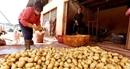 Chợ nông sản Đà Lạt vẫn tràn ngập khoai tây Trung Quốc