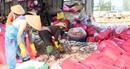 Ngư dân Quảng Ngãi trúng đậm cá cơm, ruốc