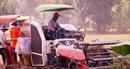 Nông dân đồng bằng sông Cửu Long phấn khởi sau chỉ đạo thu mua lúa của Thủ tướng