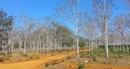 Cần sớm làm rõ việc cấp sổ đỏ hơn 300ha đất rừng trái quy định tại Đắk Nông