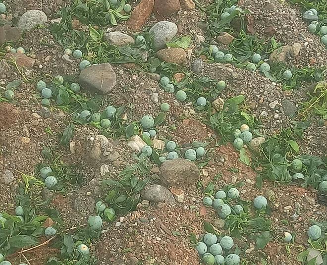 Công an Sơn La giúp nhân dân khắc phục hậu quả mưa đá - Ảnh minh hoạ 4