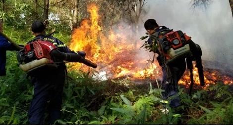 Hàng chục cảnh sát nỗ lực dập tắt vụ cháy rừng thông