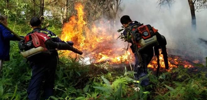 Hàng chục cảnh sát nỗ lực dập tắt vụ cháy rừng thông - Ảnh minh hoạ 2