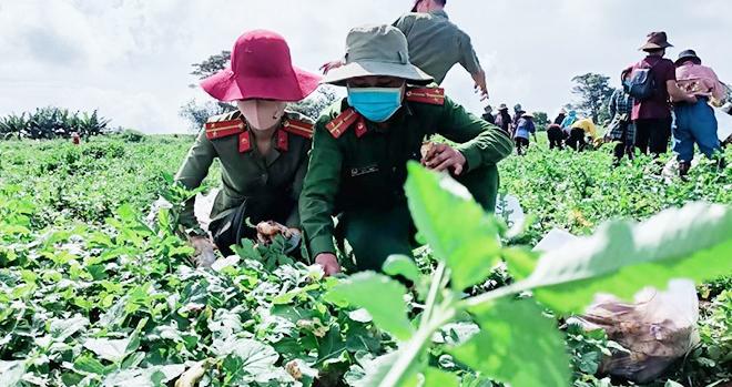 Tuổi trẻ Công an huyện Đắk Glong: ủng hộ vùng dịch hơn 60 tấn nông sản
