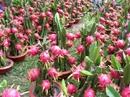 Nông sản Việt có nhiều cơ hội thâm nhập thị trường Australia